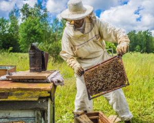 Дело о рассерженных пчелах. Или любите ли вы мед так, как люблю его я?